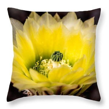 Yellow Cactus Flower Throw Pillow by  Onyonet  Photo Studios