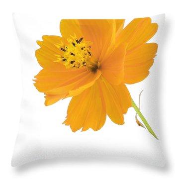 Yellow Coreopsis Throw Pillow