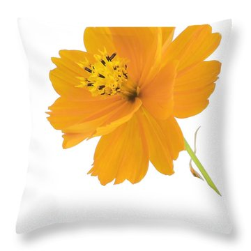 Yellow Coreopsis Throw Pillow