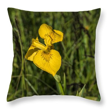 Throw Pillow featuring the photograph Yellow Crown by Leif Sohlman