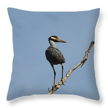 Throw Pillow featuring the photograph Yellow-crowned Night Heron by Dana Sohr
