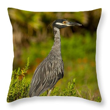 Yellow Crowned Night Heron Dune Watch Throw Pillow