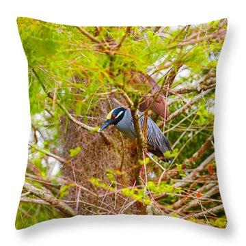 Yellow-crowned Night Heron Nyctanassa Throw Pillow