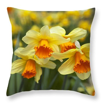 Yellow Daffodils Throw Pillow by Peter French