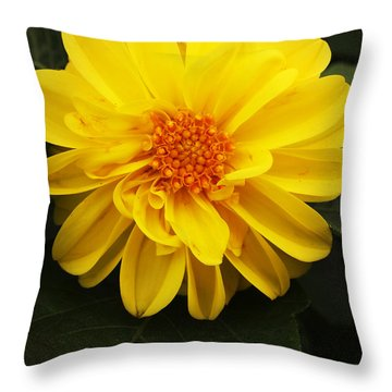 Yellow Dahlias Throw Pillow