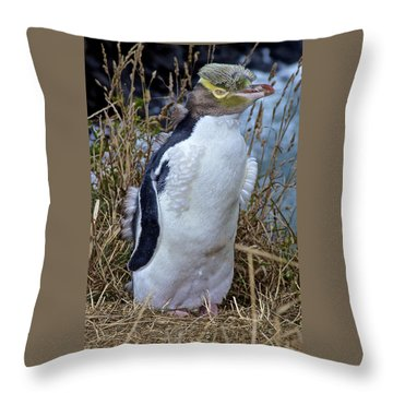 Endangered Yellow Eyed Penguin Hoiho Throw Pillow by Venetia Featherstone-Witty