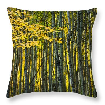 Yellow Fall Birch Leaves Against An Throw Pillow by Joel Koop