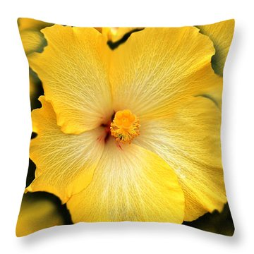 Yellow Fantasy Hibiscus Flowers Throw Pillow by Jennie Marie Schell