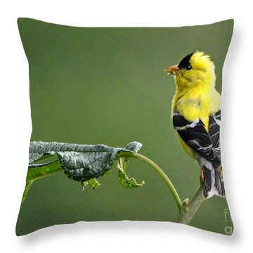 Throw Pillow featuring the photograph Yellow Finch by Nava Thompson
