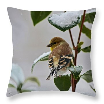 Goldfinch On Branch Throw Pillow