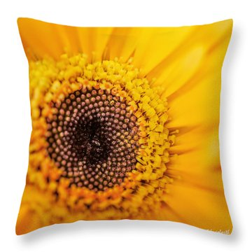Yellow Gerbera Squared Throw Pillow by TK Goforth