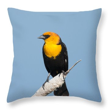 Throw Pillow featuring the photograph Yellow Headed Blackbird by Jack Bell