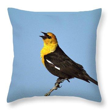 Yellow-headed Blackbird Singing Throw Pillow by Tom Vezo