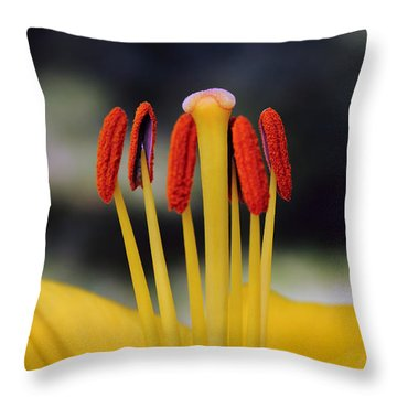 Throw Pillow featuring the photograph Yellow Lily by Glenn DiPaola