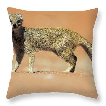Yellow Mongoose In Kalahari Desert Throw Pillow
