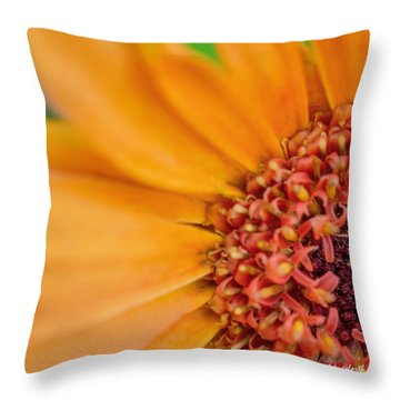 Throw Pillow featuring the photograph Yellow Orange Gerbera Squared by TK Goforth
