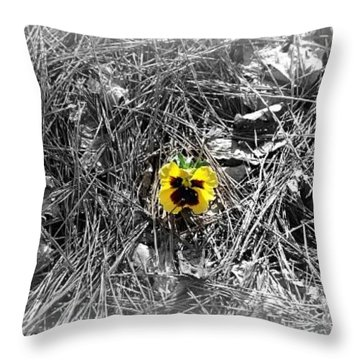 Throw Pillow featuring the photograph Yellow Pansy by Tara Potts