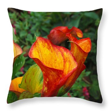 Throw Pillow featuring the photograph Yellow Red Calla Lily by Eva Kaufman