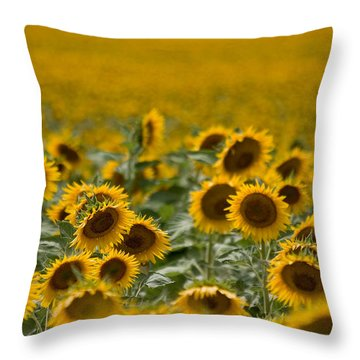 Throw Pillow featuring the photograph Yellow by Ronda Kimbrow
