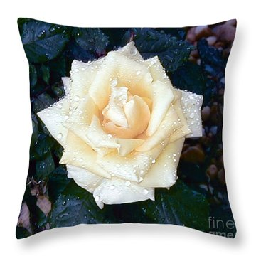 Throw Pillow featuring the photograph Yellow Rose At Dawn by Alys Caviness-Gober