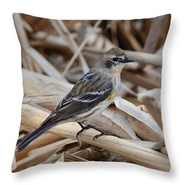 Yellow-rumped Warbler Throw Pillow by Debra Martz