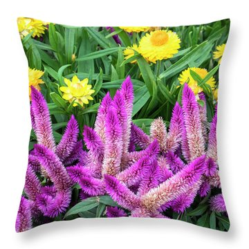 Asteraceae Throw Pillows
