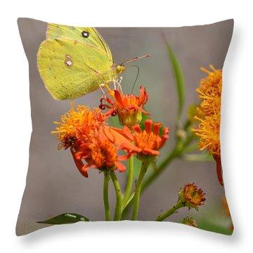 Yellow Sulphur Butterfly Throw Pillow by Debra Martz