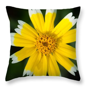 Yellow Sunshine  Throw Pillow by Gandz Photography