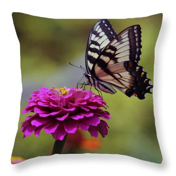 Yellow Tiger Swallowtail Butterfly Throw Pillow