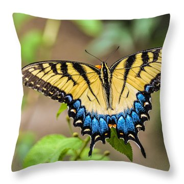Yellow Tiger Swallowtail Throw Pillow by Debbie Green