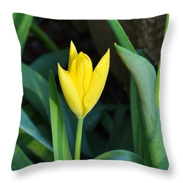 Throw Pillow featuring the photograph Yellow Tulip by Mary Zeman
