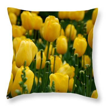 Yellow Tulip Sea Throw Pillow by Jennifer Ancker