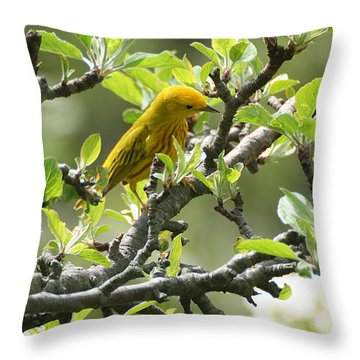 Throw Pillow featuring the photograph Yellow Warbler In Pear Tree by William Selander