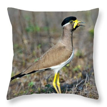 Yellow-wattled Lapwing Vanellus Throw Pillow