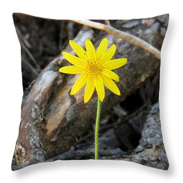 Throw Pillow featuring the photograph Yellow Wildflower by Laurel Powell