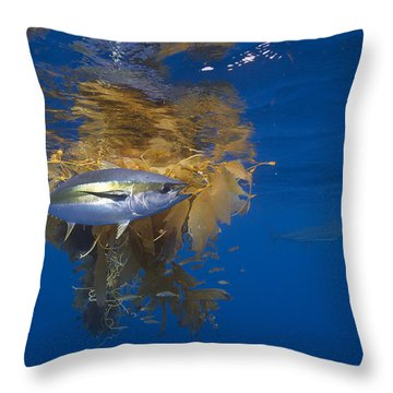 Throw Pillow featuring the photograph Yellowfin Tuna And Kelp Nine-mile Bank by Richard Herrmann