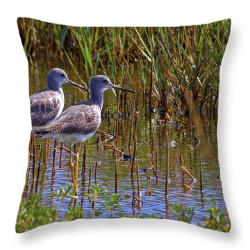 Throw Pillow featuring the photograph Yellowlegs Of Texas by Gary Holmes