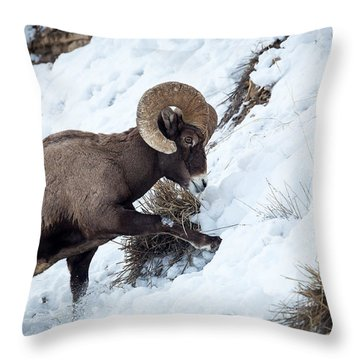 Yellowstone Bighorn Throw Pillow