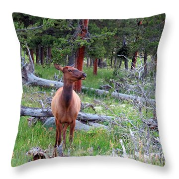Yellowstone Moments. Doe Throw Pillow