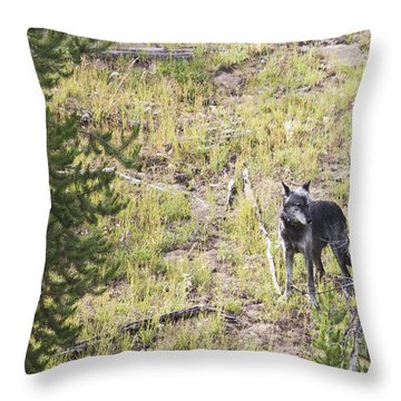 Yellowstone Wolf Throw Pillow by Belinda Greb