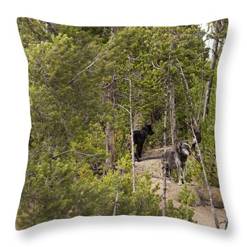 Yellowstone Wolves Throw Pillow by Belinda Greb