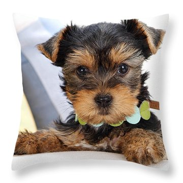 Yorkshire Terrier Puppy Throw Pillow by Marvin Blaine