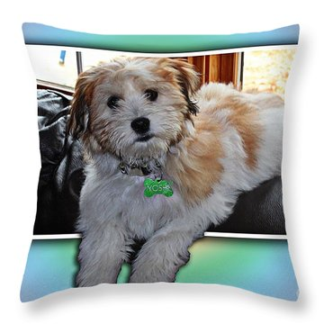 Yoshi Havanese Puppy Throw Pillow by Barbara Griffin