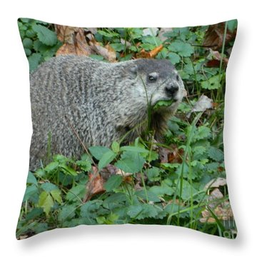 Throw Pillow featuring the photograph You Looking At Me? by Emmy Marie Vickers