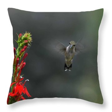 Throw Pillow featuring the photograph You Looking At Me by Judy Wolinsky