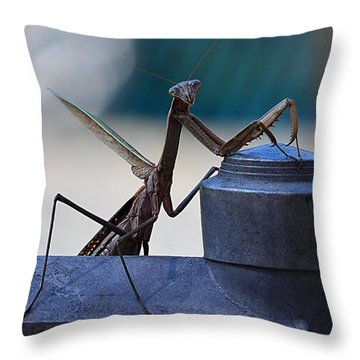 You Looking At Me - Pray Mantis Throw Pillow