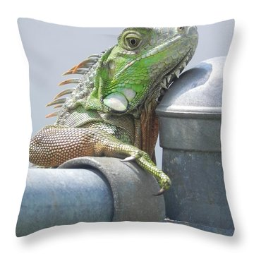 You Look'n At Me Throw Pillow by Chrisann Ellis