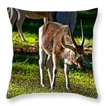 Youngster Addax Throw Pillow