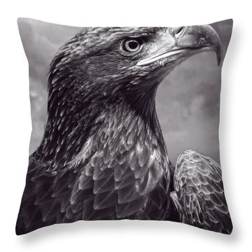 Young Bald Eagle V3 Throw Pillow by F Leblanc