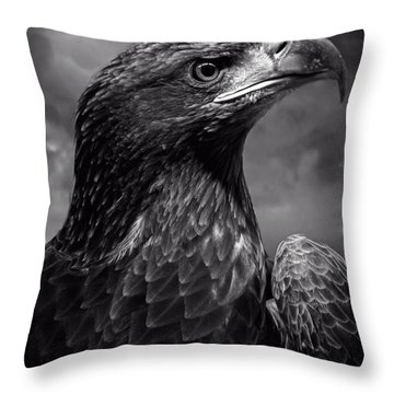 Young Bald Eagle V4 Throw Pillow by F Leblanc